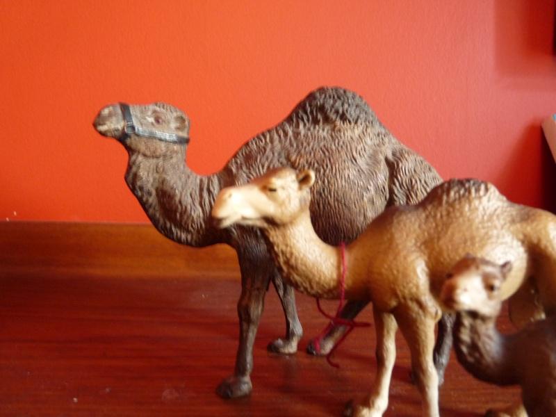 The amazing Elastolin buffalo and dromedary Camels10