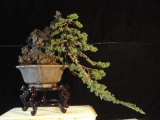 playing with light -  juniper cascade Dsc08514