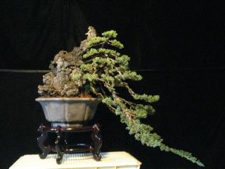 playing with light -  juniper cascade Dsc08515