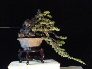playing with light -  juniper cascade Dsc08610