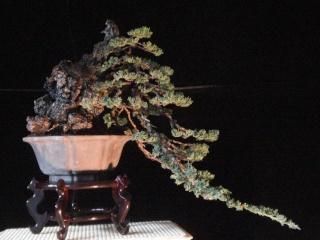 playing with light -  juniper cascade Dsc08613