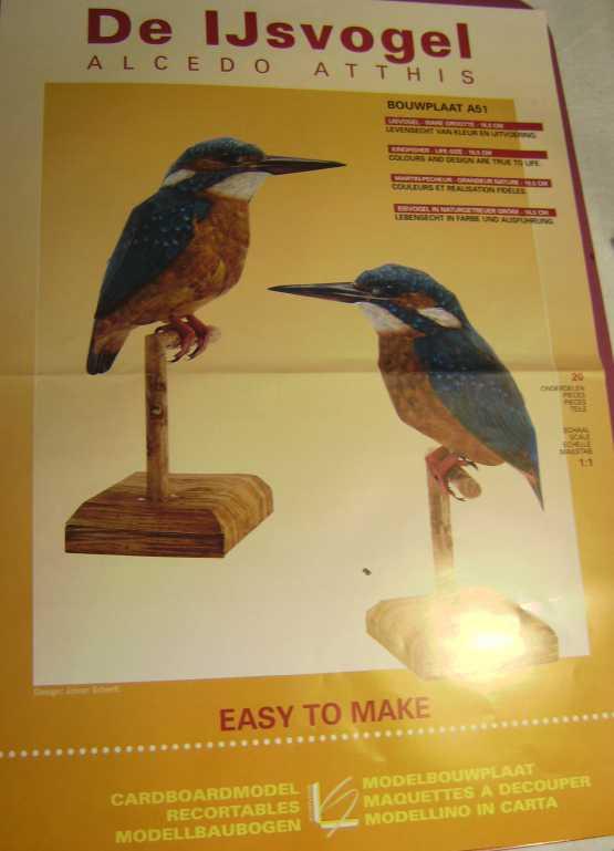 Eisvogel im Maßstab 1:1 Bild5737