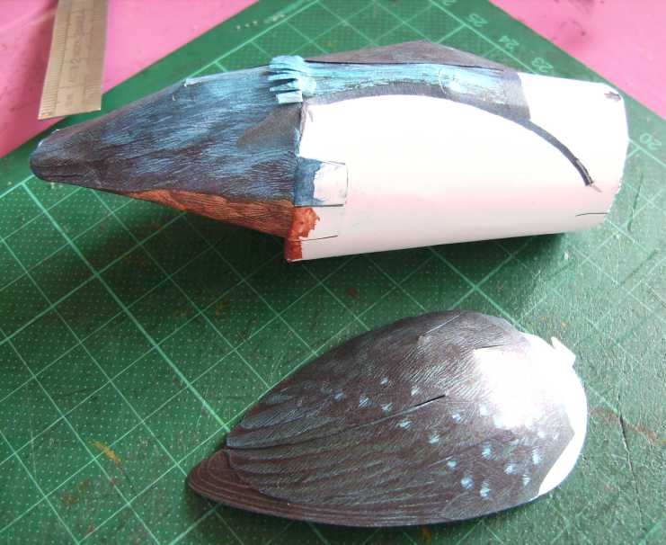 Eisvogel im Maßstab 1:1 Bild5740