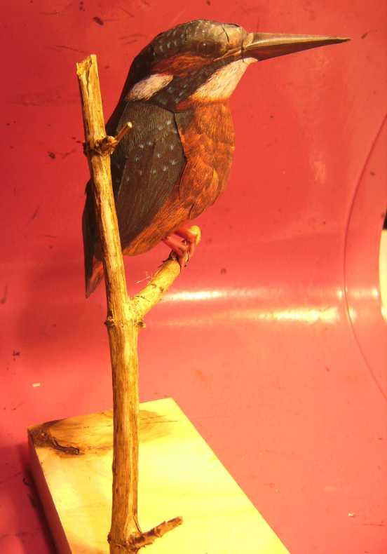 Eisvogel im Maßstab 1:1 Bild5743