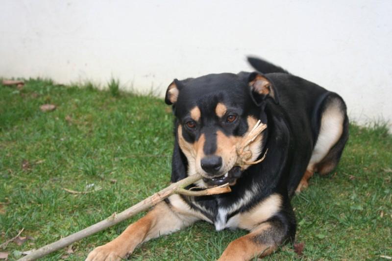 Apprendre à canaliser un jeune chien/adolescent - Page 6 029_8011