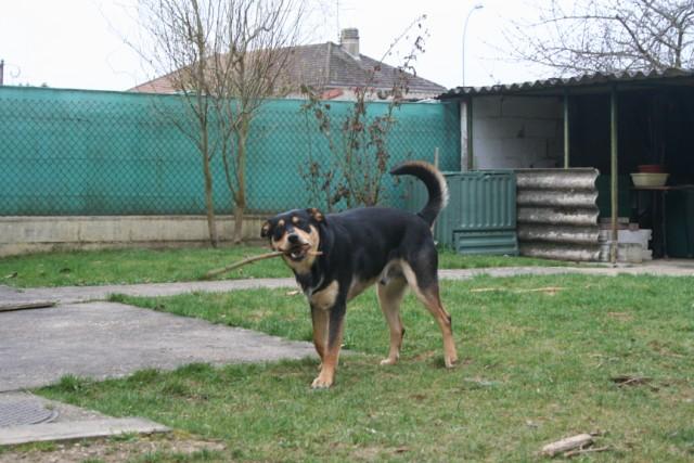 Apprendre à canaliser un jeune chien/adolescent - Page 6 037_6411