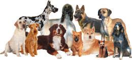 Chiens passion : des chiens et des hommes