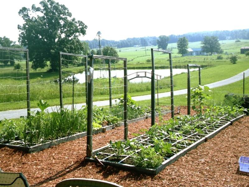 My Kentucky Garden Imag0014