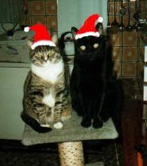 Weihnachten 2010 _bmp11