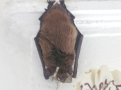 Back to the bats..... Bat110