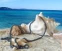 Cadeau de Poseidon. Collie10