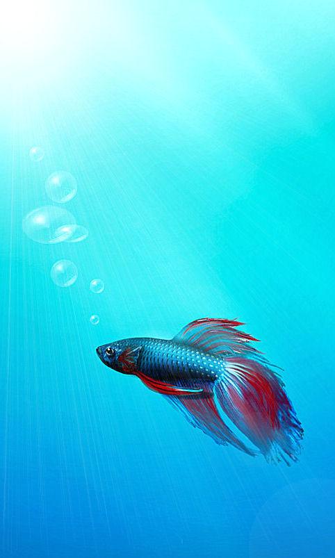 WALLPAPERS - Postez ici vos meilleurs Wallpapers :) Fish14