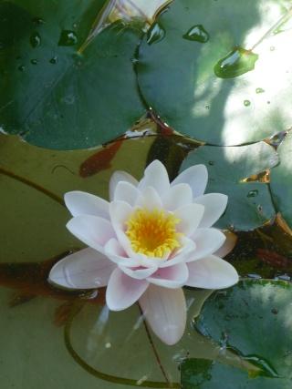 les photos de mon bassin rénové Bassin35