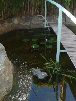 les photos de mon bassin rénové Bassin36