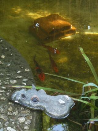 les photos de mon bassin rénové Bassin37