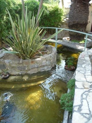 les photos de mon bassin rénové Bassin41