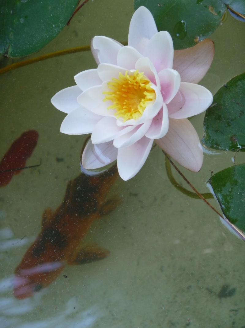 les photos de mon bassin rénové Bassin43