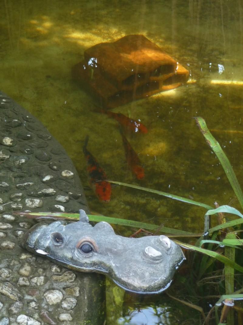 les photos de mon bassin rénové P1030612