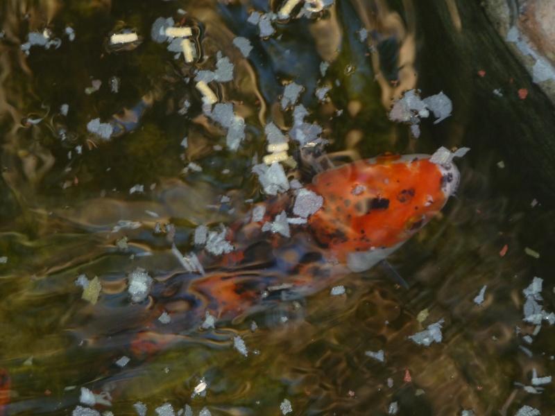 les photos de mon bassin rénové P1030613