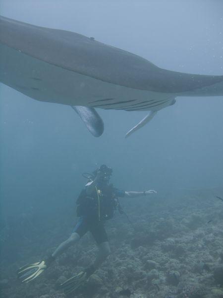 Faune maldivienne sous-marine (grands animaux)... P3034512