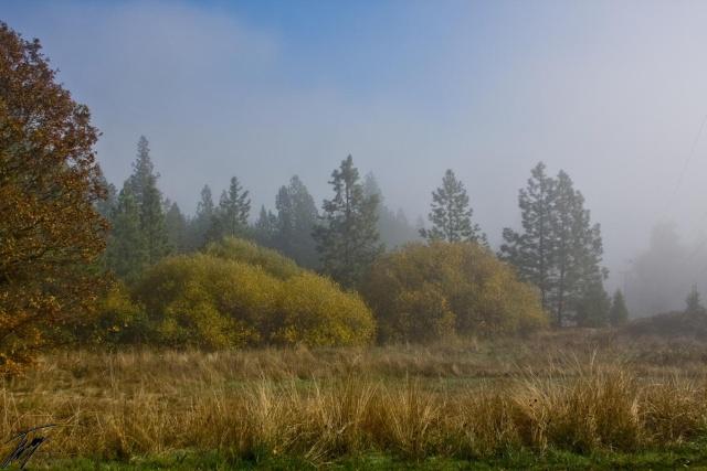 Ummm... Foggy Day? Img_3615