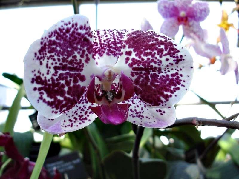 Les orchidées Orchid15
