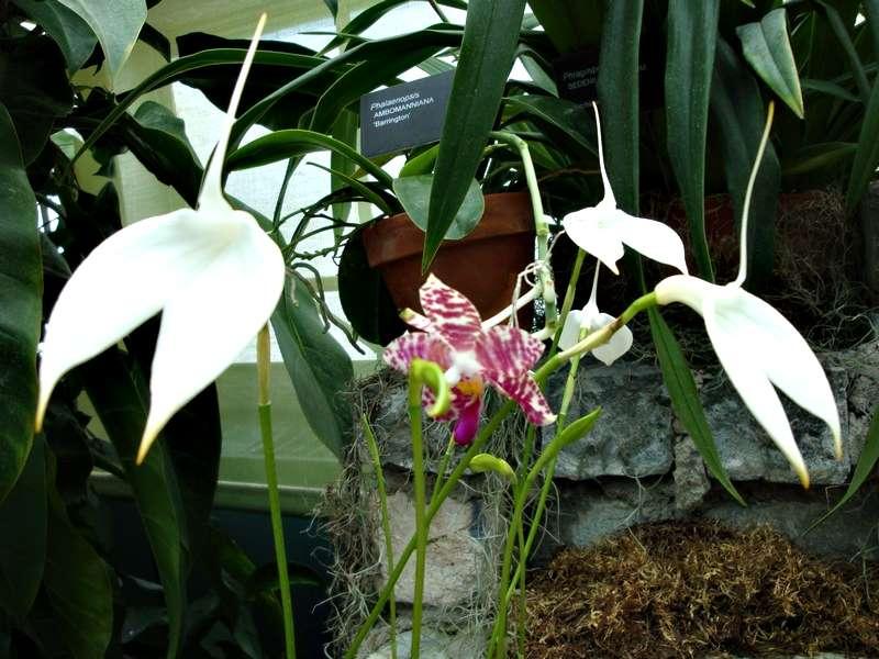 Les orchidées Orchid16