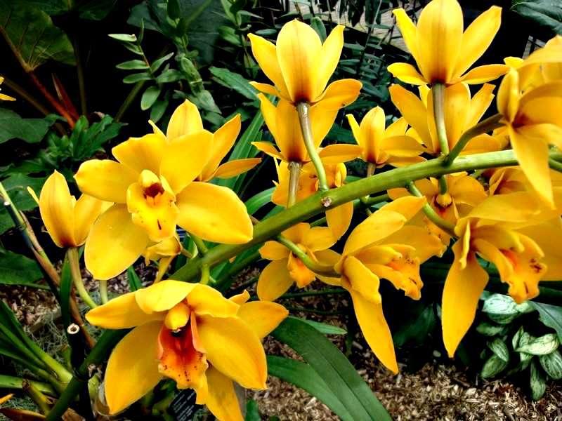 Les orchidées Orchid22