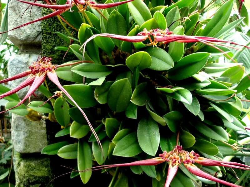 Les orchidées Orchid23