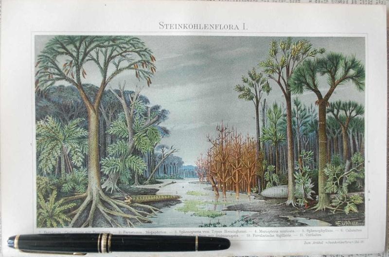 Représentation bidimensionnelle de la forêt houillère Il_ful11