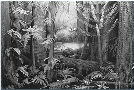 Représentation bidimensionnelle de la forêt houillère Sans_t10