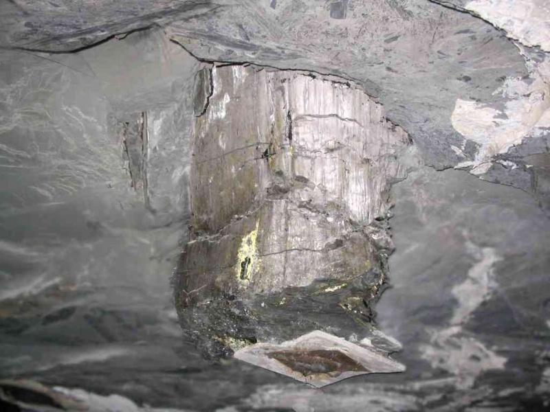 Représentation bidimensionnelle de la forêt houillère Stump10