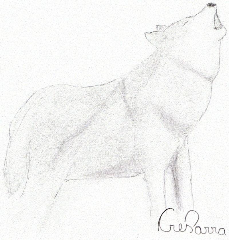 Wolf Img00310