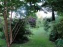 feuillages, écorces et contre-jour Jardin12
