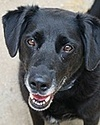 OUR BUDDY BOY, LOVELY DOG JUST NEEDS THE RIGHT HOME Buddy_10