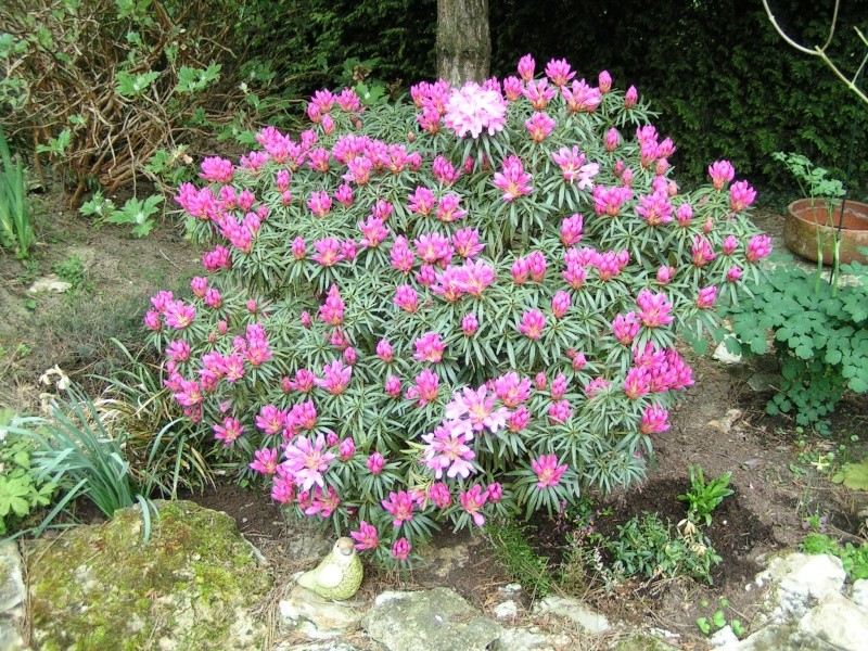 Choix rhododendron 00000016