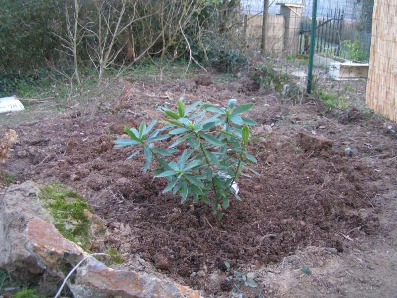 photos de mon jardin Pict0011