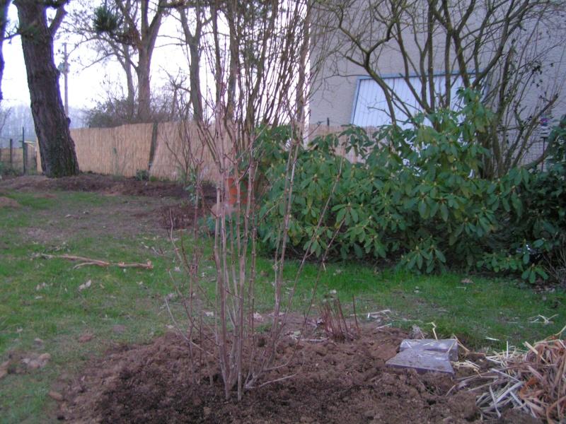 photos de mon jardin Pict0014