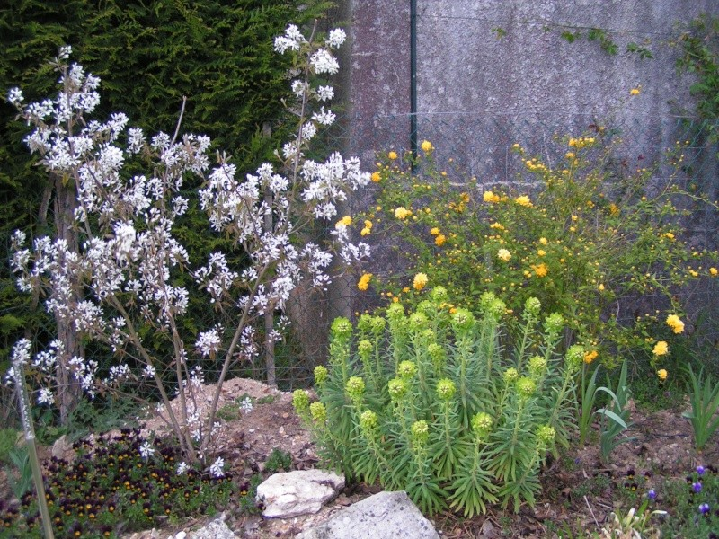 photos de mon jardin Pict0026