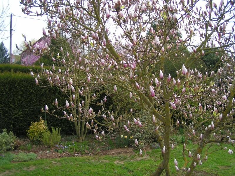 photos de mon jardin Pict0027