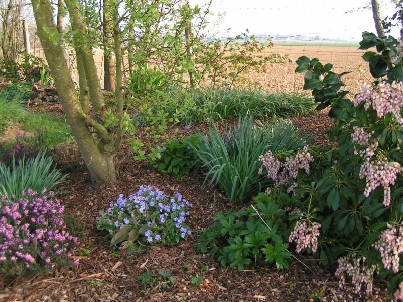 photos de mon jardin Pict0028