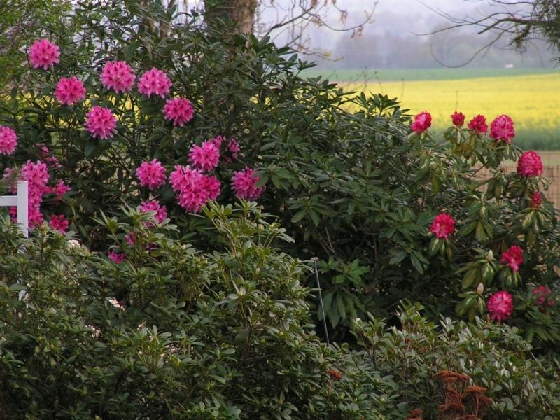 photos de mon jardin Pict0034