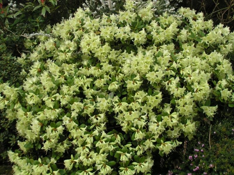 photos de mon jardin Pict0036