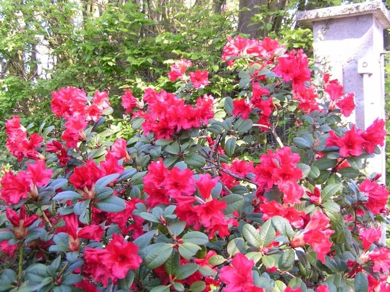 photos de mon jardin Pict0040