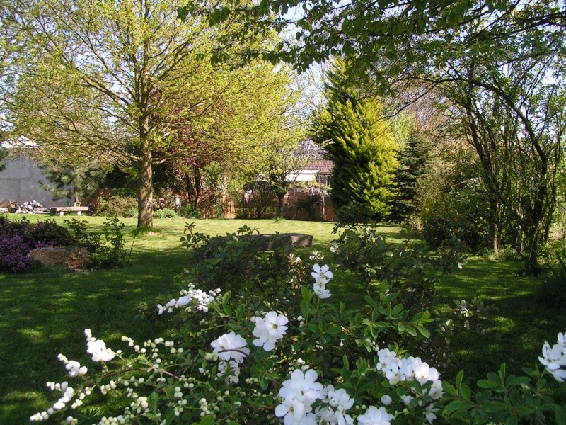 photos de mon jardin Pict0041