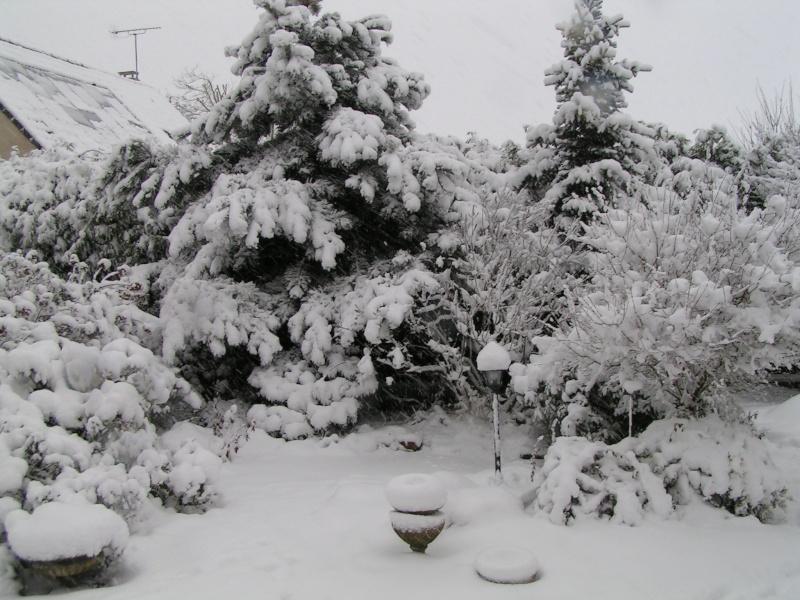 photos de mon jardin Pict0218