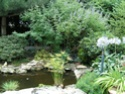 photos de mon jardin Bassin10