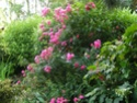 photos de mon jardin Emera10