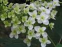 photos de mon jardin Gros_p10