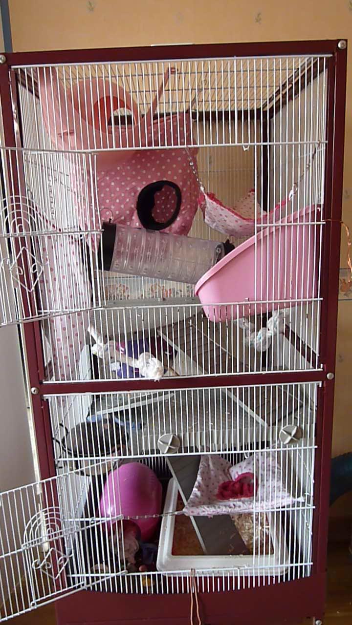 Photos de vos cages - Page 3 P1010810